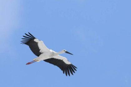 よこはま動物園ズーラシアから兵庫県立コウノトリの郷公園への個体移動